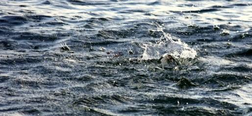 De l'eau, de l'eau ! (Photo Pierre-Olivier Arthur / FlickrR / cc)