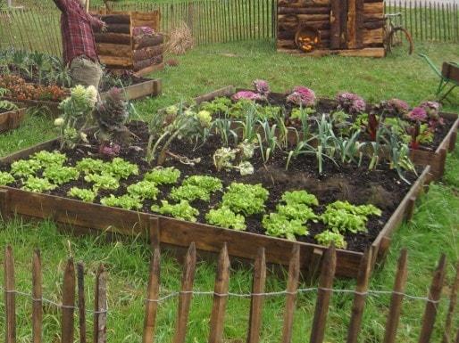 Un jardin potager (wikipedia)