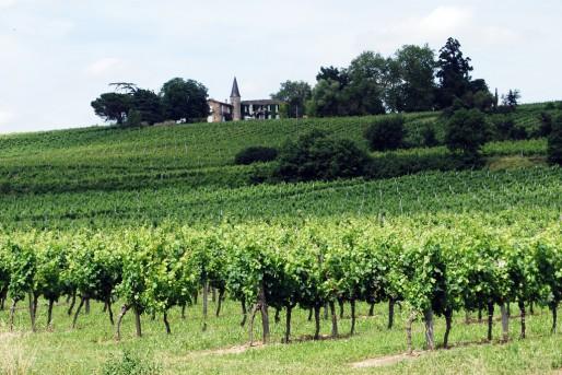 Vignoble dans l'Entre-deux-mers (WS/Rue89 Bordeaux)