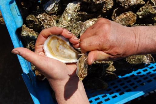 L'huître, un fleuron de la gastronomie française qui aimerait retrouver son naturel (WS/Rue89 Bordeaux)