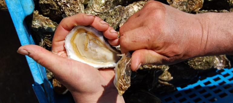 L'huître naturelle devient une perle rare