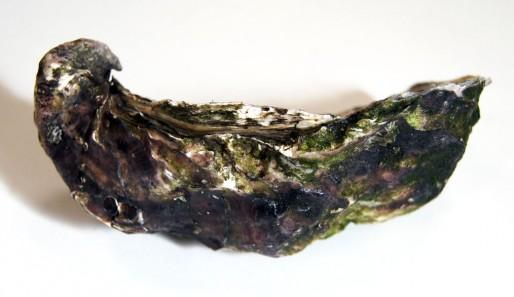 L'huître triploïde, reconnaissable à sa charnière qui se retourne sur elle-même (WS/Rue89 Bordeaux)