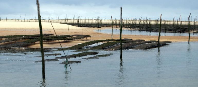 L'interdiction frappe encore les huîtres du Bassin d'Arcachon