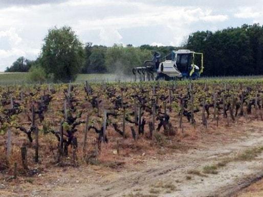 Épandage de pesticides dans le Médoc (DR)
