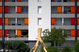 L'arbre du Bois Fleuri, symbole de ce quartier en rénovation urbaine de Lormont (Photo c-dr-c/flickr/cc)