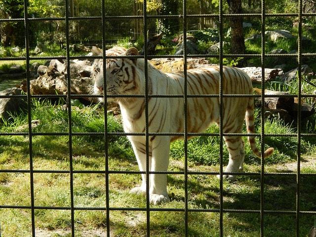 Le projet save mort et enterr le zoo de pessac vendre - Piscine municipale pessac ...