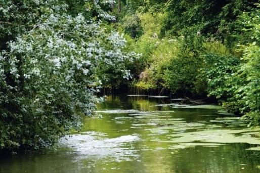 Le champ captant du Thil fournit (après traitement) 40% de l'eau potable de la CUB (Photo Eau de la CUB/DR)