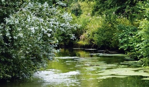 L'eau se ressource grâce à l'agriculture bio