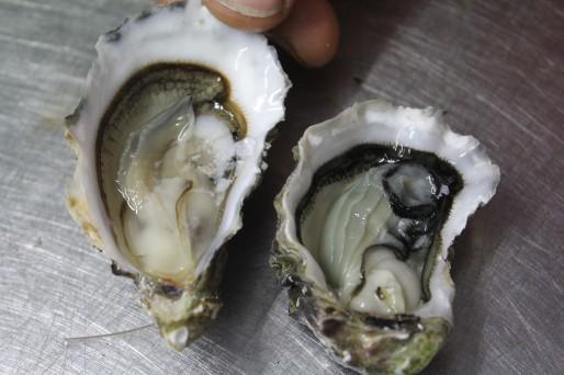 80% de la chair de l'huître est constituée pendant les quelques semaines passées dans les marais.