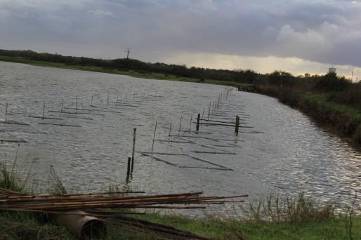 Les huîtres sont déposées dans ces casiers, au sein des marais.