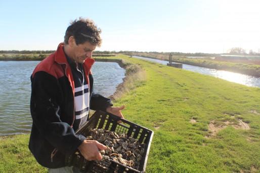 Bertrand Iung élève ses huîtres dans les marais du Médoc.