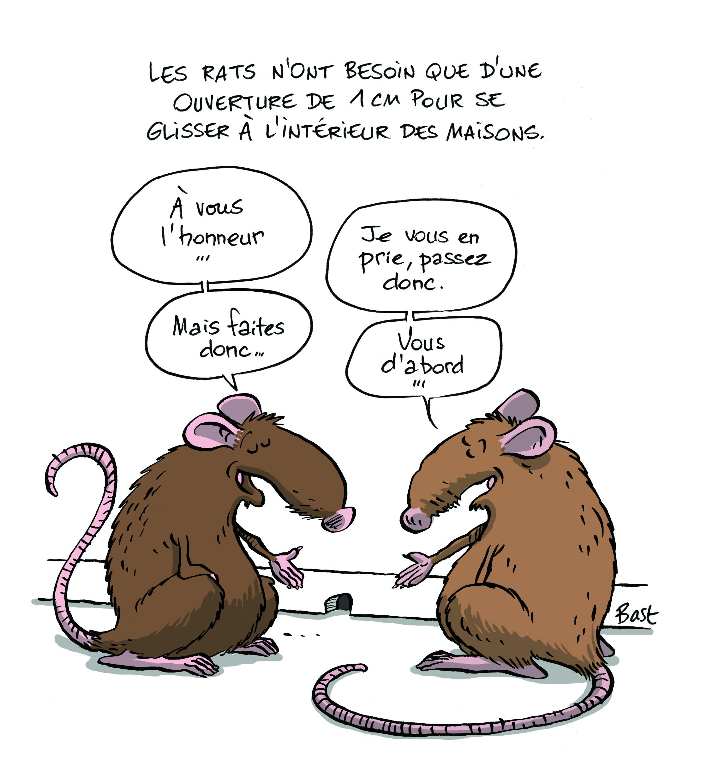 J Ai Une Souris Chez Moi lutter contre souris et rats sans se ronger les sangs