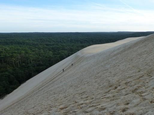 Le Conservatoire du littoral veut racheter les forêts privées entourant la Dune du Pilat (CB/Rue89 Bordeaux)