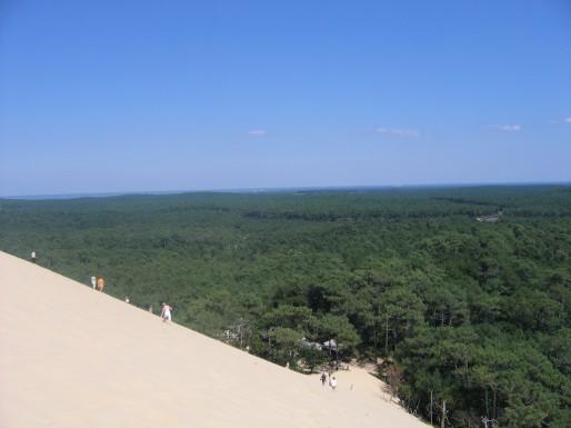 Le Syndicat mixte de la Dune du Pilat et le Conservatoire du littoral veulent racheter 400 hectares, dont 160 en forêt usagère (CB/Rue89 Bordeaux)