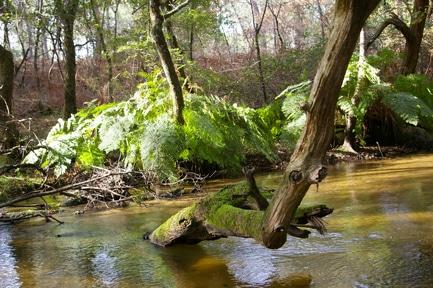 Le Ciron, un affluent de la Garonne, dans le Sud Gironde (jacme31/flickr/CC)
