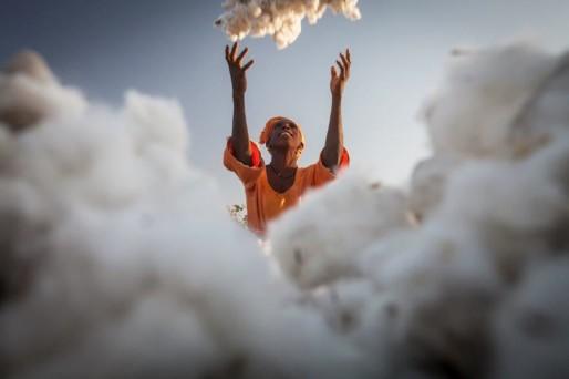 Après la récolte du coton (Max Havelaar France/DR)