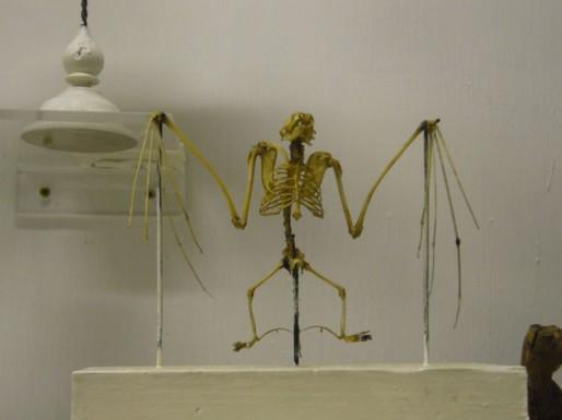 Squelette de chauve-souris, en 2007 avant la fermeture du Muséum (Dam's/flickr/CC)