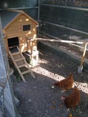 Claudine Cereza, domiciliée au Bouscat, a construit à ses poules un poulailler de luxe, avec nichoir, qu'elles boudent pour l'heure (Claudine Cereza).
