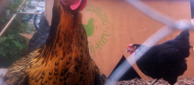 À la Bastide-Niel, une ferme urbaine peut en cacher une autre