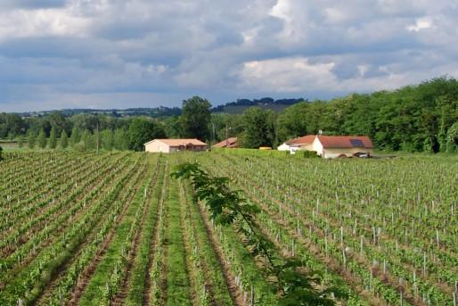 Habitations en bordure des vignes vers Preignac (WS/Rue89 Bordeaux)