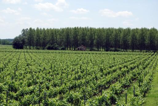 Vignoble dans le Bordelais (WS/Rue89 Bordeaux)