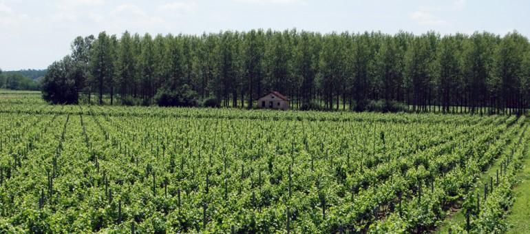 LGV : les AOC Sauternes et Graves «en danger»