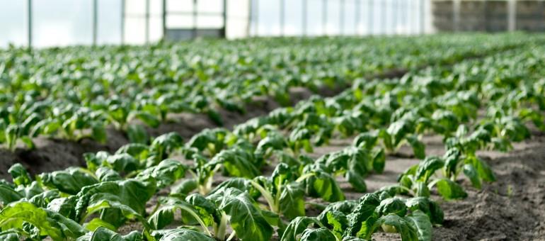 Agriculture : Bordeaux Métropole cherche jeunes pousses