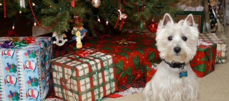 Noël au poil pour les quatre pattes