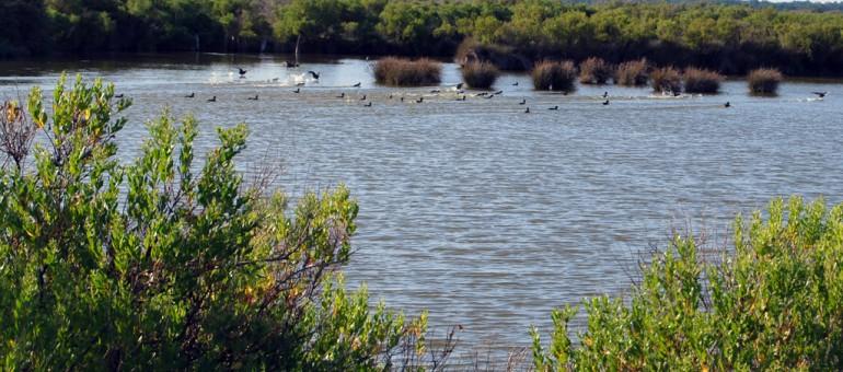 Qui se mouille pour les zones humides ?