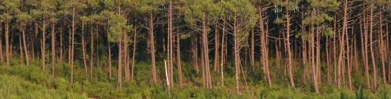 Forêt Gascogne