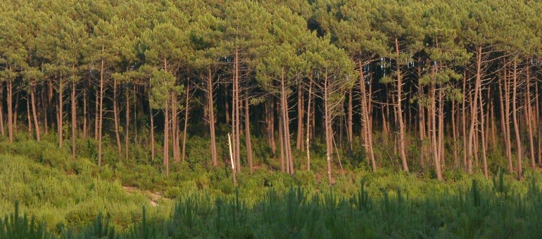 Front commun contre les feux de forêt dans les Landes de Gascogne