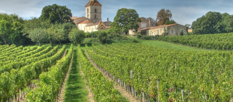 Pesticides : ce que prévoit le préfet pour les vignes de Gironde