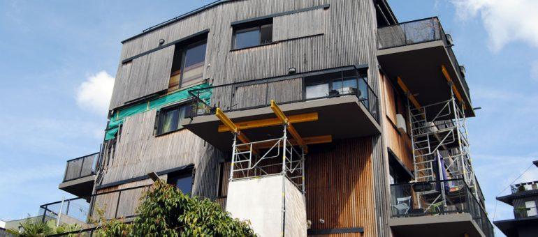 Un an après, il y a encore un lézard avec le balcon de Ginko