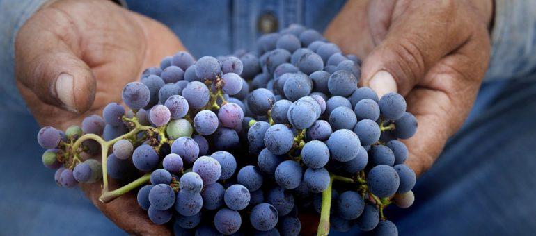 Crowdfunding #1 : Winefunding, ou comment devenir (un peu) châtelain
