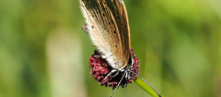 Effet papillon contre la déviation du Taillan-Médoc