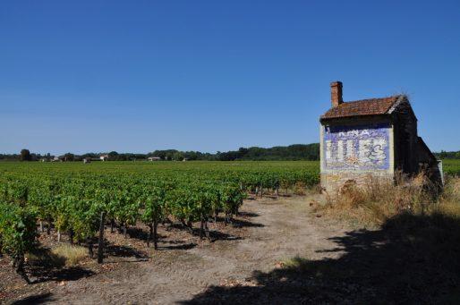 Vignes du Sauternais (XR/Rue89 Bordeaux)