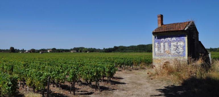 Des vins de Bordeaux plus verts pour mieux se vendre?