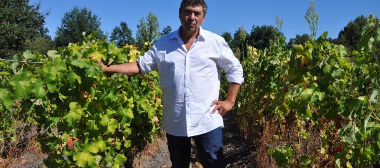 Dans le Sauternais, «on veut nous interdire de faire du vin naturel !»