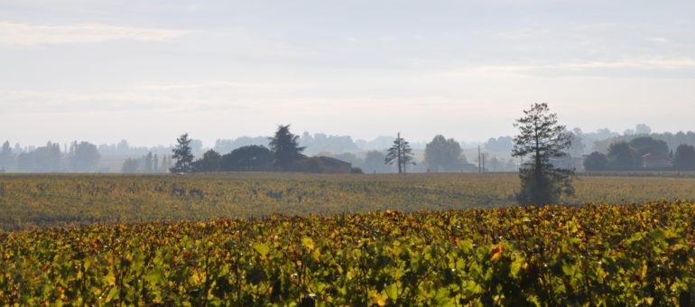 Pesticides : «Le ministère était dépendant de la FNSEA et compagnie»