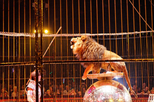 Un lion du cirque Pinder (DR)