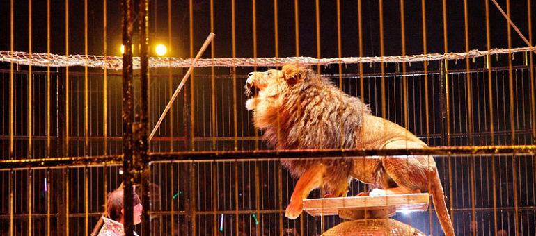 Bordeaux écarte l'interdiction des cirques présentant des animaux sauvages