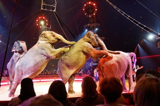 paris_-_cirque_pinder_-_joe_gartner_-_les_elephants_-_037