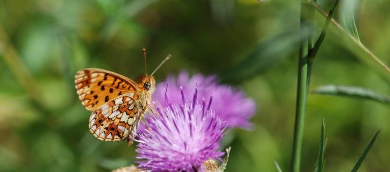 Un GIEC pour surveiller la biodiversité de Nouvelle-Aquitaine