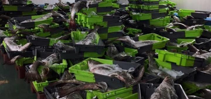 Pétition : Stop au massacre du maigre dans l'Estuaire de la Gironde