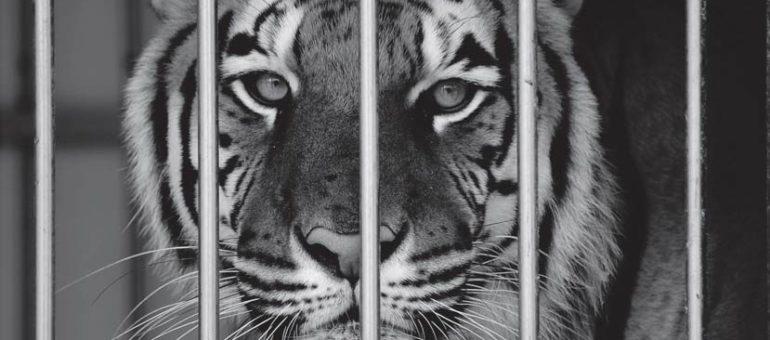 L'exposition «Sauvages» pour libérer les animaux des spectacles