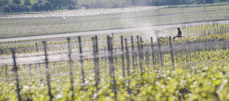 Des pesticides détectés dans une école et plusieurs habitations du Médoc