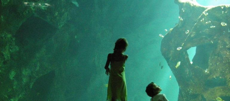 Une pétition contre l'aquarium de Bordeaux (qui est loin de tomber à l'eau)
