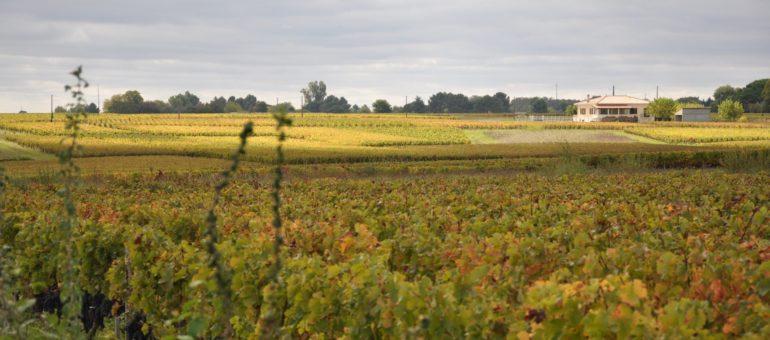 Dossier #17 : Vers une vigne vraiment verte ?