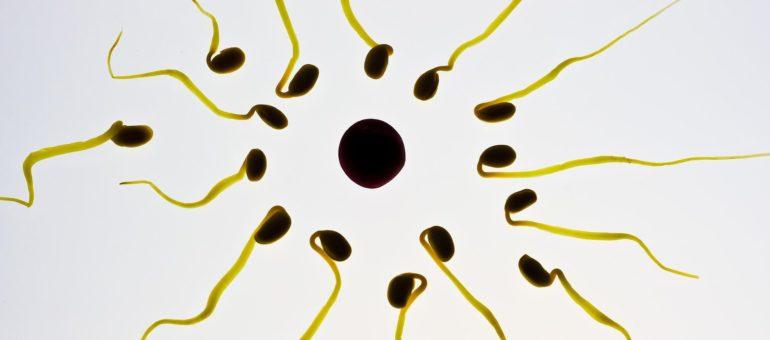 Vasectomie : des Bordelais prennent leur contraception en main