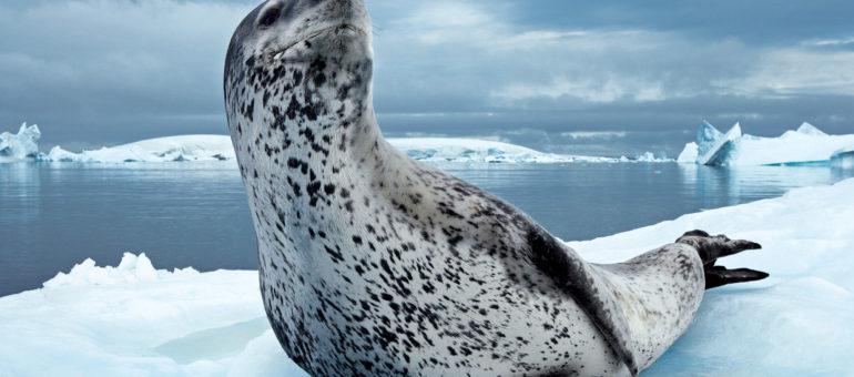 Le Musée Mer Marine démarre avec une exposition du National Geographic